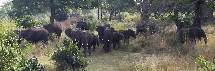 Our neighbors from the nearby Game Park passing by...and checking us out.